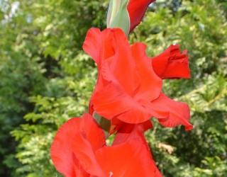 Musical Palace videoclips - Gladiole,trandafiri si muscate